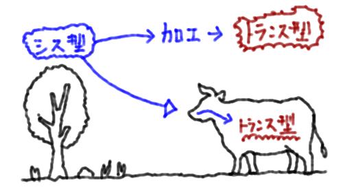 トランス脂肪酸 簡単 説明