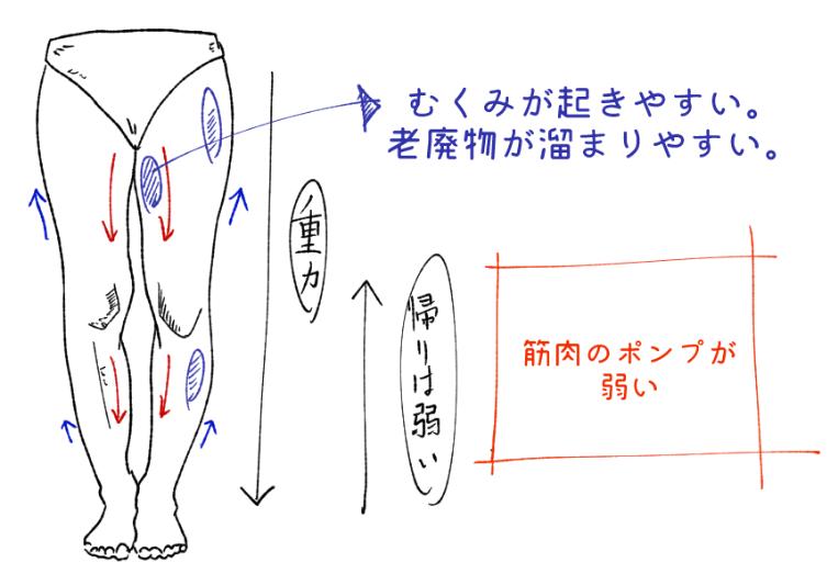下半身のむくみは筋肉のポンプが大切